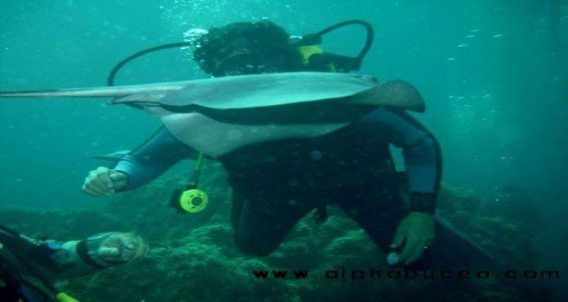 Centro de buceo Alpha y paseos en barco por el Cabo de Gata